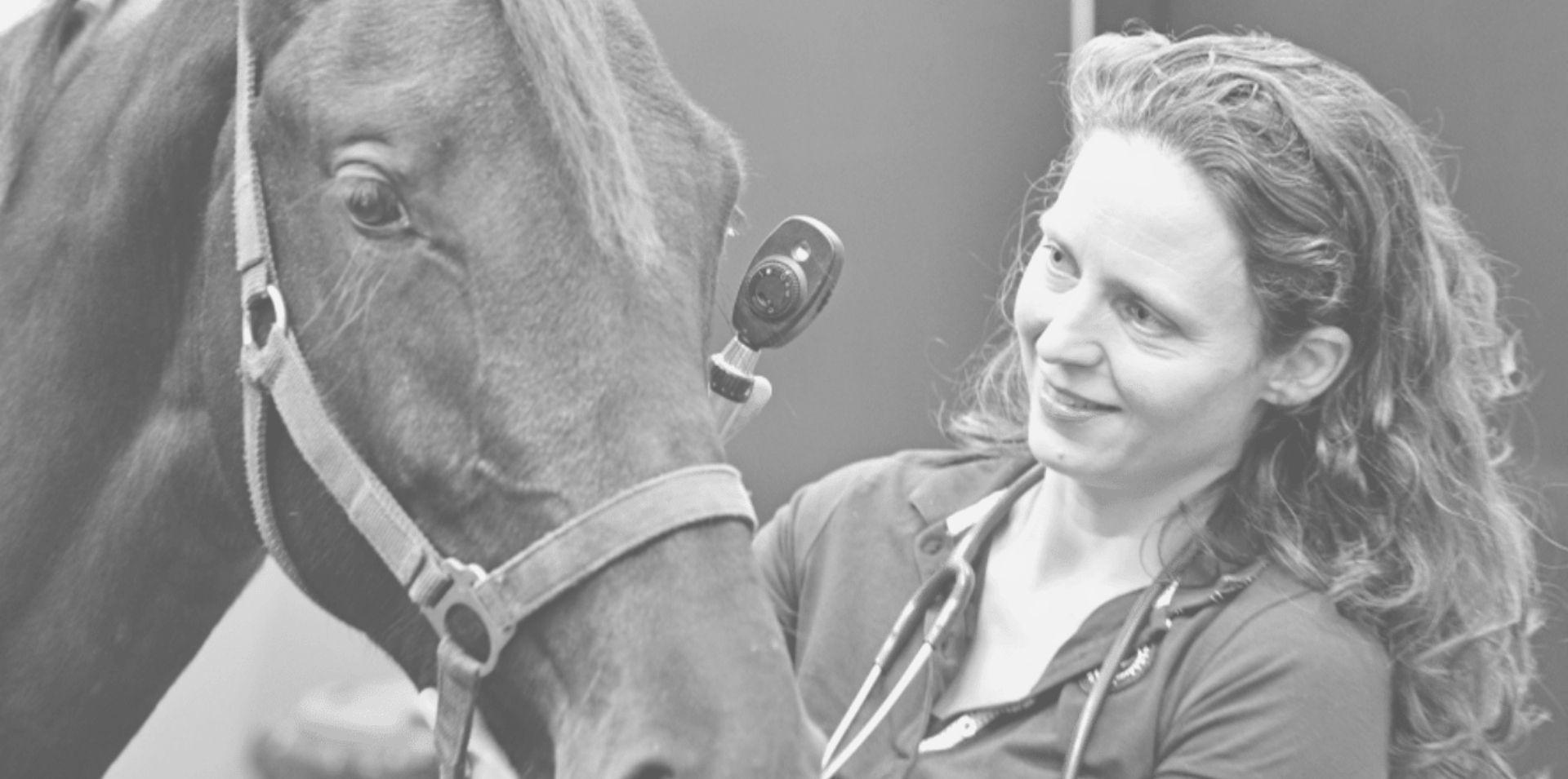 oog-onderzoek-paard
